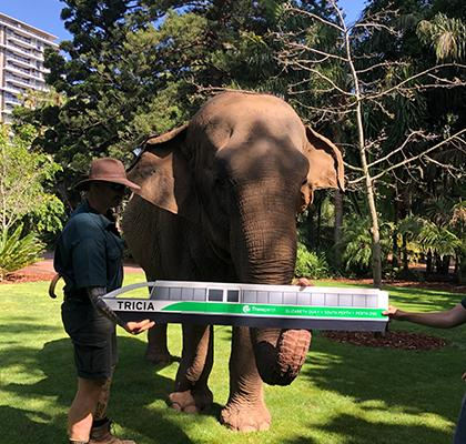Tricia the elephant holds a model of her namesake ferry